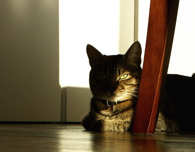 The Cat who.... 猫の写真日記