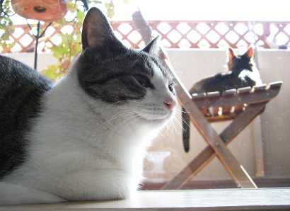 アイシス&ジェリー:写真 by mirura