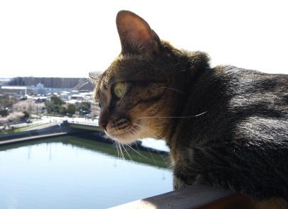 猫のアイシス&ジェリー:写真 by mirura
